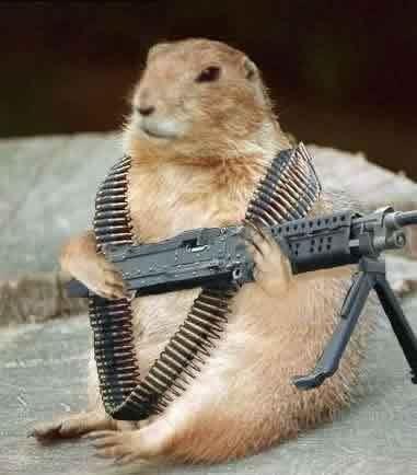 groundhog-gun