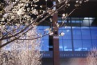 Blossoms in front of Life Sciences