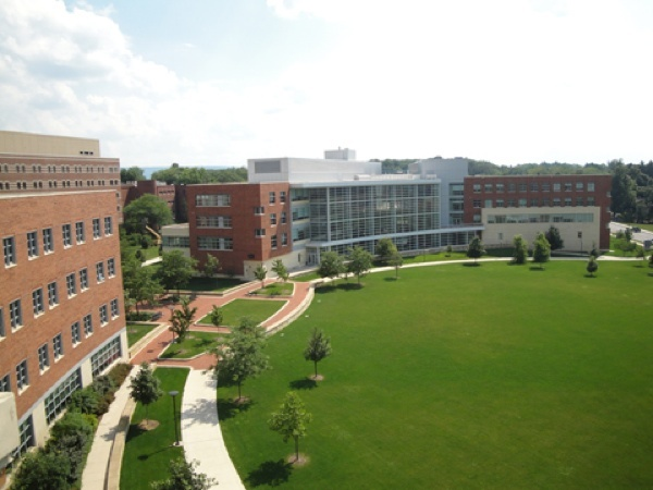 Business Building Lawn