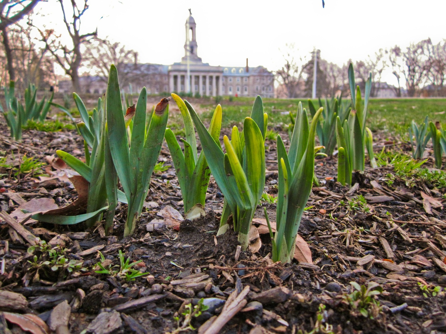 Signs of Spring Outside of Old Main -- Photo by Eric Weiss