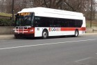 New Cata Buses