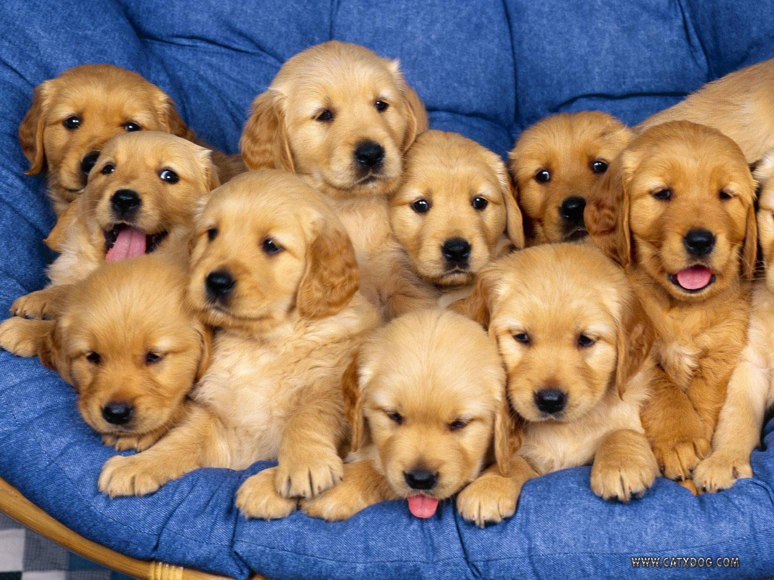 Penn State Needs a Finals Week Puppy Room