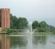 altoona ducks