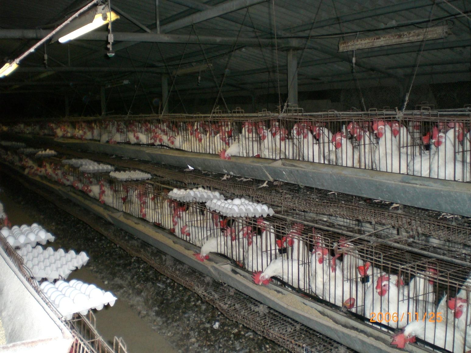 Industrial-Chicken-Coop-1