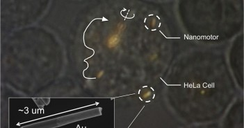 Mallouk_microscope-image_2-2014