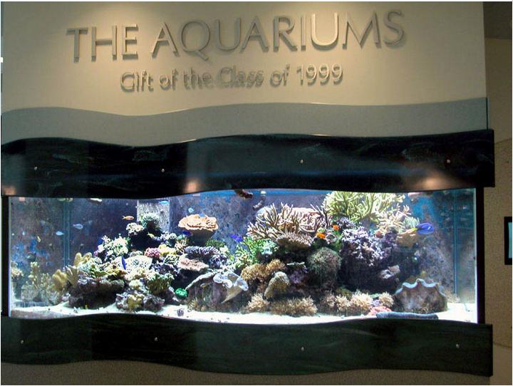 Behind The Scenes Of The Hub Aquarium Onward State