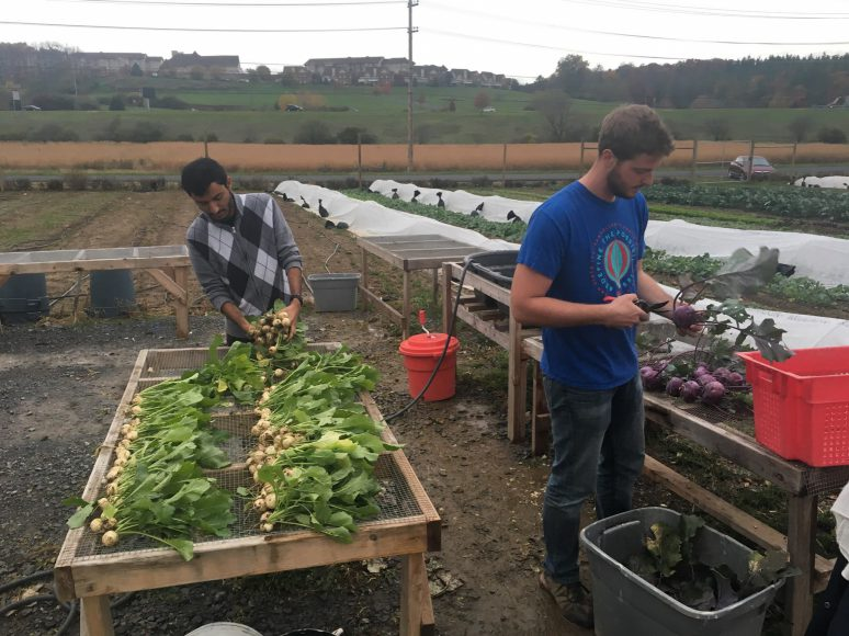 Student members are currently working to finish up the year's harvest before winter arrives. (Photo: Claire Fountas)